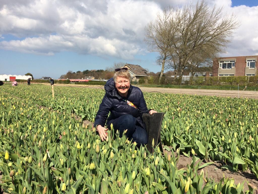 Susanne pflückt Tulpen