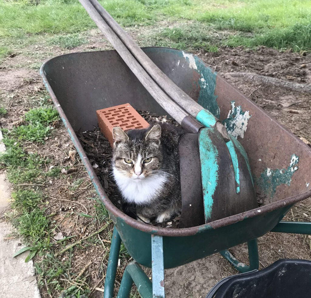 Katzen in Eichhof