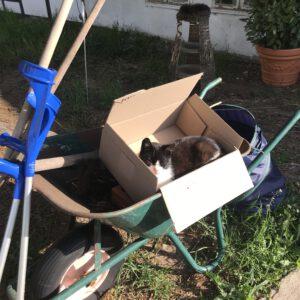 #12von12 Katze in Karre