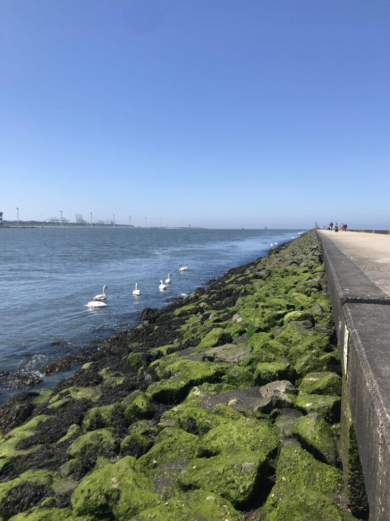 #12von12 Pier