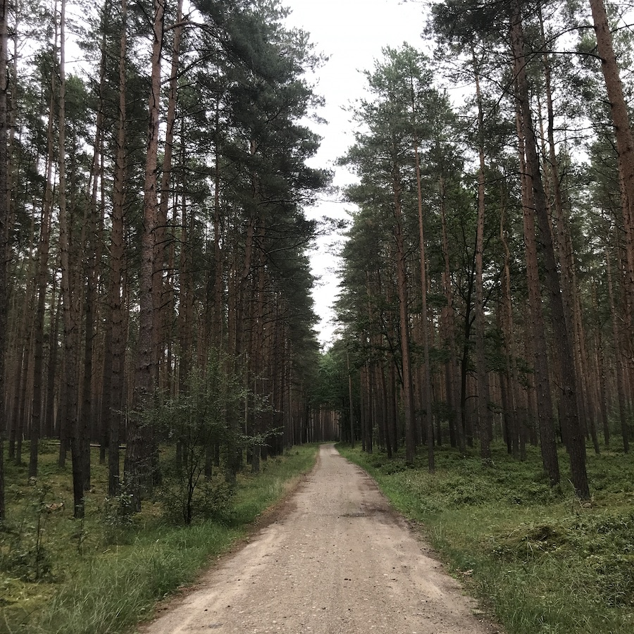 Eichhof Wald Spaziergang